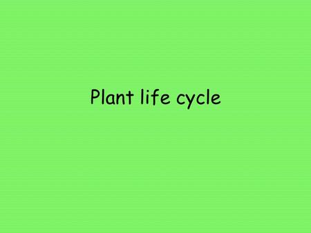 Plant life cycle. Male and female parts Color the anther blue and the pistil pink.