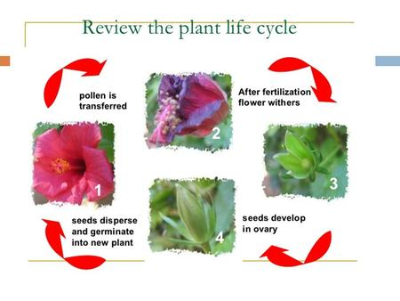 Parts and functions of the Plant 1. Petals 2. Sepals 3. Stamen 4. Anther 5. Pistil 6. Ovary.
