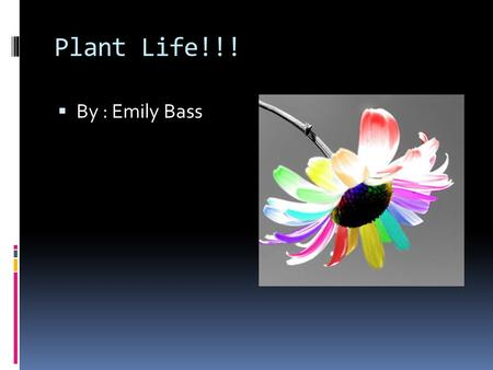 Plant Life!!!  By : Emily Bass. Photosynthesis Photosynthesis- is the process of converting light energy to chemical energy and storing it in the bonds.