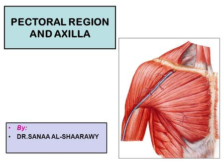 PECTORAL REGION AND AXILLA