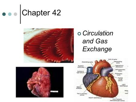 Chapter 42 Circulation and Gas Exchange. Circulation system evolution, I Gastrovascular cavity (cnidarians, flatworms) Open circulatory hemolymph (blood.