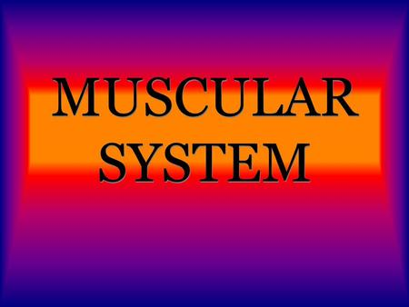 MUSCULAR SYSTEM. FUNCTIONS: BODY MOVEMENT PUMP BLOOD THROUGHOUT YOUR BODY MOVES FOOD THROUGH THE DIGESTIVE SYSTEM CONTROLS THE MOVEMENT OF AIR IN AND.