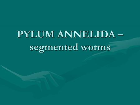 PYLUM ANNELIDA – segmented worms. Annelids Representative species – common earthwormRepresentative species – common earthworm Have a coelom – fluid filled.