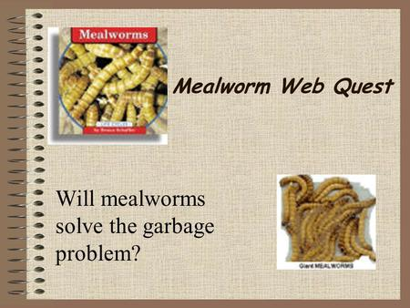 Will mealworms solve the garbage problem?
