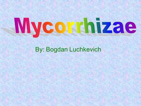 By: Bogdan Luchkevich. Mycorrhizzae Symbiosis Mycorrhizae a symbiotic relationship with a plant's roots and a fungi that is primarily Mutualistic (benefits.