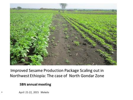 April 21-22, 2015 Mekele SBN annual meeting Improved Sesame Production Package Scaling out in Northwest Ethiopia: The case of North Gondar Zone.