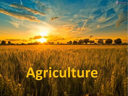 Agriculture Agriculture. What is it? Agriculture: (AKA Farming or Husbandry) -Cultivating another species for our benefit. (note: collecting wild species.
