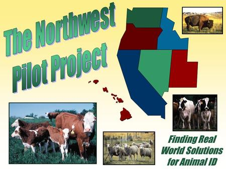 Finding Real World Solutions for Animal ID. NWPP Major Milestones March 2004: Cattle associations visit with Bill Hawks and Keith Collins of the USDA.