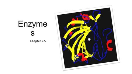 Enzyme s Chapter 2.5. Enzymes are catalysts for chemical reactions in living things.
