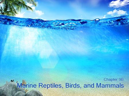 Marine Reptiles, Birds, and Mammals Chapter 9B. Biology of Marine Mammals Little is actually known about many marine mammals –Difficult or impossible.