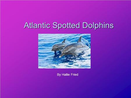 Atlantic Spotted Dolphins By Hallie Fried You're in the tropical waters and you see a couple of splashes and polk-a-dots seem to soar through the air.