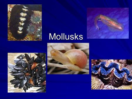 Mollusks. Zebra Mussels Invaded Great Lakes- came from Great Britain Reproduce quickly-one female releases 40,000 Cause problems-clog intake pipes- Competition.