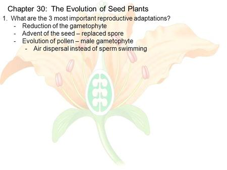 Chapter 30: The Evolution of Seed Plants 1.What are the 3 most important reproductive adaptations? -Reduction of the gametophyte -Advent of the seed –