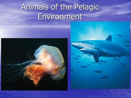 Animals of the Pelagic Environment. Staying above the ocean floor o Gas containers Shells - rigid gas containers ex. celphalopods.