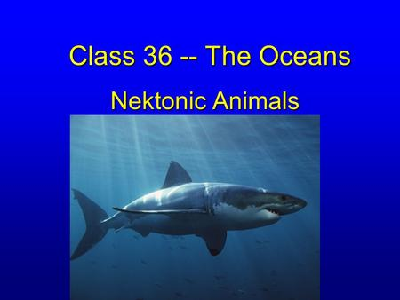Class 36 -- The Oceans Nektonic Animals. Large shrimp (Arthropods) A few unusual molluscs –Chambered Nautilus –Cuttlefish –Squid A few INVERTEBRATES.