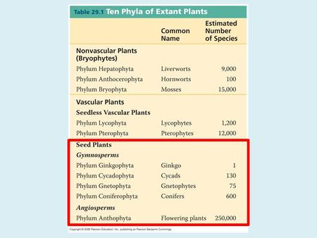 Gymnosperms (naked seeds) Diverged 150 mya, when Earth became warmer and drier and the swamp forests declined. – no swimming for the sperm. Members.