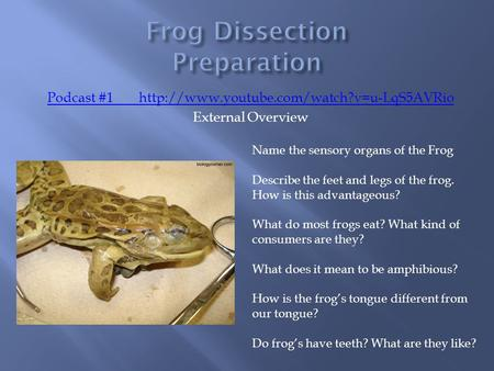 Podcast #1http://www.youtube.com/watch?v=u-LqS5AVRio External Overview Name the sensory organs of the Frog Describe the feet and legs of the frog. How.