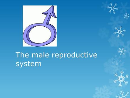 The male reproductive system.  Humans have 2 types of gametes:  Males have sperm – small, motile, many  Females have eggs – large, non-motile, few.