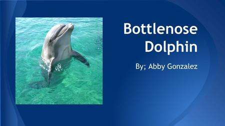 Bottlenose Dolphin By; Abby Gonzalez. ●Bottlenose dolphins are well known as the intelligent and charismatic stars of many aquarium shows. ●Their curved.
