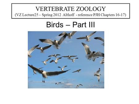 Birds – Part III VERTEBRATE ZOOLOGY (VZ Lecture25 – Spring 2012 Althoff - reference PJH Chapters 16-17) Bill Horn.