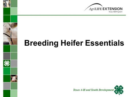 Breeding Heifer Essentials Texas 4-H and Youth Development.