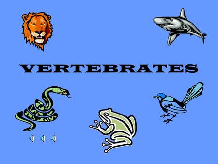 "VERTEBRATES What is a ""vertebrate?"" Animal that has a backbone, or a vertebral column All are part of the Chordate Phylum –Nerve Cord (hollow tube) –Notocord."