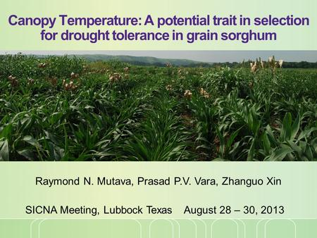 Canopy Temperature: A potential trait in selection for drought tolerance in grain sorghum Raymond N. Mutava, Prasad P.V. Vara, Zhanguo Xin SICNA Meeting,