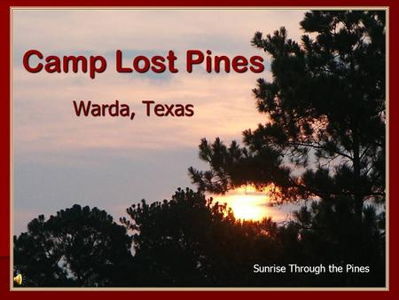 Camp Lost Pines Warda, Texas Sunrise Through the Pines.