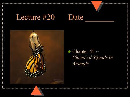 Lecture #20Date _______ u Chapter 45 ~ Chemical Signals in Animals.