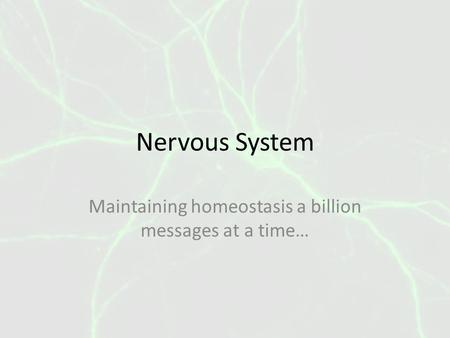 Nervous System Maintaining homeostasis a billion messages at a time…