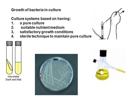 Growth of bacteria in culture