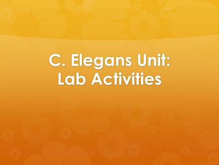 C. Elegans Unit: Lab Activities
