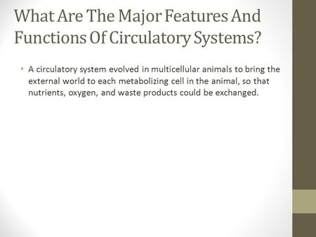 What Are The Major Features And Functions Of Circulatory Systems?