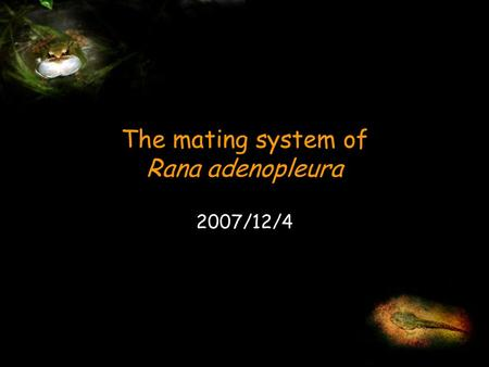 The mating system of Rana adenopleura 2007/12/4. Introduction Methods Animal model and study site Field procedure Preliminary result Behaviour Male mating.