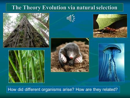 The Theory Evolution via natural selection How did different organisms arise? How are they related?