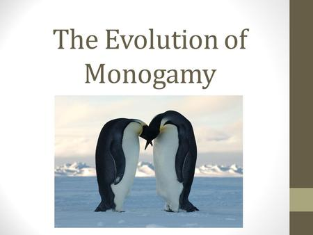 The Evolution of Monogamy. Monogamy- general facts Only 5% of mammals are monogamous Mammals tend to form social groups Obligate monogamy- biparental.