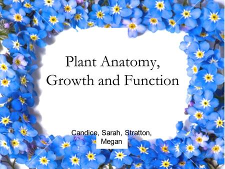 Plant Anatomy, Growth and Function Candice, Sarah, Stratton, Megan.