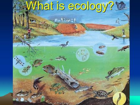 What is ecology? Ecology- watch the video Ecology Ecology = scientific study of the interactions among organisms and between organisms and their environment.