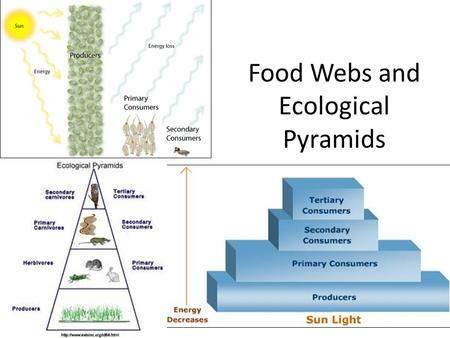 Food Webs and Ecological Pyramids. Review: what is a food web? Food chains and food webs show how organisms get energy from their food Food webs show.
