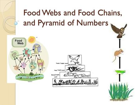 Food Webs and Food Chains, and Pyramid of Numbers.