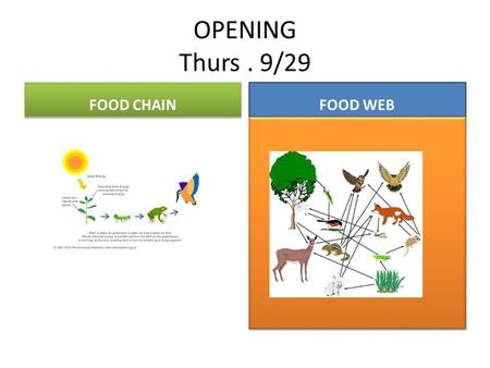 OPENING Thurs. 9/29 FOOD CHAIN FOOD WEB. Thur. Sept. 29 th OPENING You Need instructors Signature today on your DBA sheet before 9am 9:05….ESSENTIAL QUESTIONS.