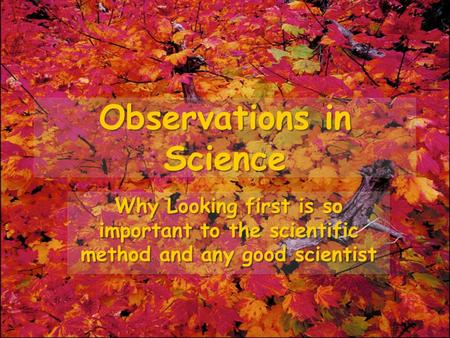 Observations in Science Why Looking first is so important to the scientific method and any good scientist.