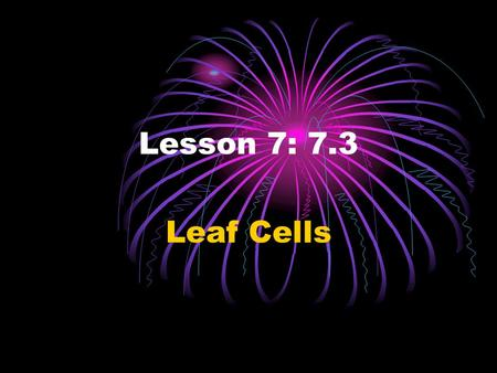 Lesson 7: 7.3 Leaf Cells. QUESTION: How can you identify a plant cell?