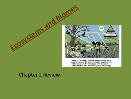Ecosystems and Biomes Chapter 2 Review. Eats other organisms. Consumers.