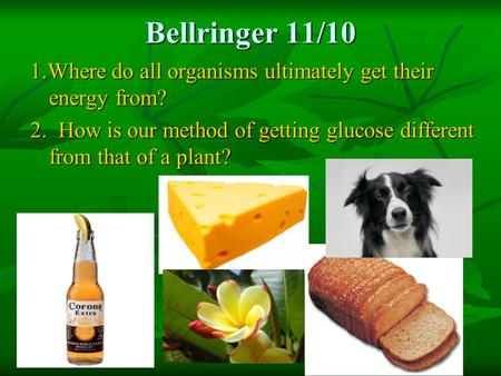 Bellringer 11/10 1.Where do all organisms ultimately get their energy from? 2. How is our method of getting glucose different from that of a plant?