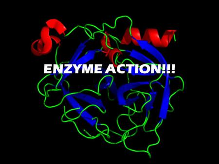 ENZYME ACTION!!!. What are Enzymes? An enzyme is a biological catalyst. It speeds up a chemical reaction without being used up in the reaction or becoming.