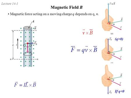 Lecture 14-1 Magnetic Field B Magnetic force acting on a moving charge q depends on q, v. (q>0) If q<0 A.