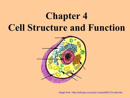 Chapter 4 Cell Structure and Function Image from: