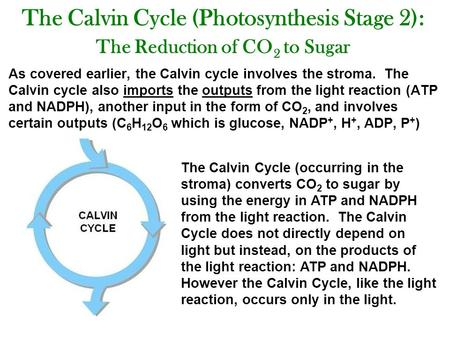 The Calvin Cycle (Photosynthesis Stage 2): The Reduction of CO 2 to Sugar As covered earlier, the Calvin cycle involves the stroma. The Calvin cycle also.