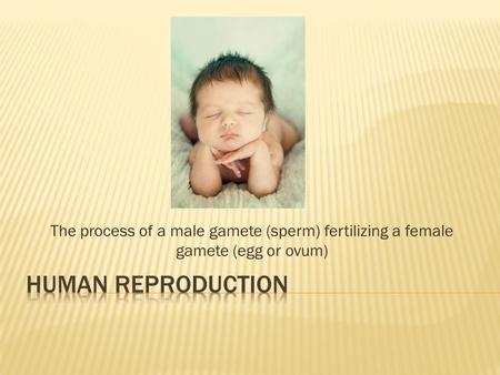 The process of a male gamete (sperm) fertilizing a female gamete (egg or ovum)